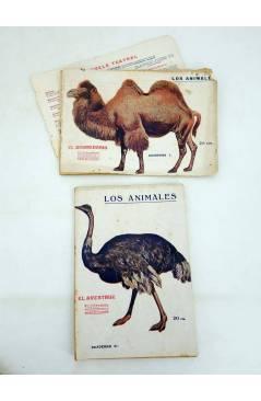 Muestra 2 de LOS ANIMALES 4 5 7 8 9 14. LOTE DE 7. GATO MONTÉS ÁGUILA TIGRE OSO CANGURO… (Vvaa) Prensa Popular 1919