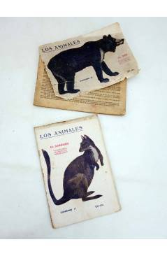 Muestra 3 de LOS ANIMALES 4 5 7 8 9 14. LOTE DE 7. GATO MONTÉS ÁGUILA TIGRE OSO CANGURO… (Vvaa) Prensa Popular 1919