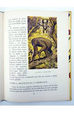 Muestra 2 de LOS ANIMALES Y SUS COSTUMBRES VOL 2. GRANDES ANIMALES (M. Mas Sala) Dalmau Carles Pla 1957