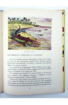 Muestra 3 de LOS ANIMALES Y SUS COSTUMBRES VOL 2. GRANDES ANIMALES (M. Mas Sala) Dalmau Carles Pla 1957