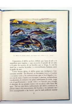 Muestra 2 de LOS ANIMALES Y SUS COSTUMBRES VOL 4. SERES DEL FONDO DEL MAR (M. A De Gascons) Dalmau Carles Pla 1957