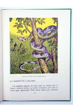 Muestra 3 de LOS ANIMALES Y SUS COSTUMBRES VOL 5. ANIMALES CURIOSOS (A. Lorenzana) Dalmau Carles Pla 1957